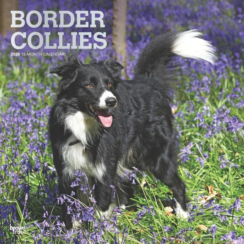 Border Collie hond 2020 dieren wandkalender