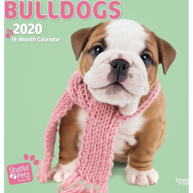 Bulldog hondjes 2020 dieren wandkalender