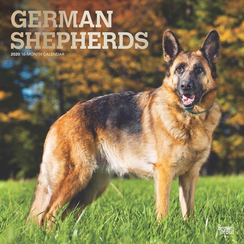 Duitse Herdershond 2020 dieren wandkalender