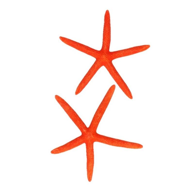 Oranje zeesterren decoratie