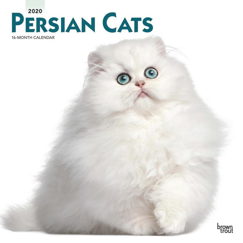 Perzische katjes/poesjes 2020 dieren wandkalender