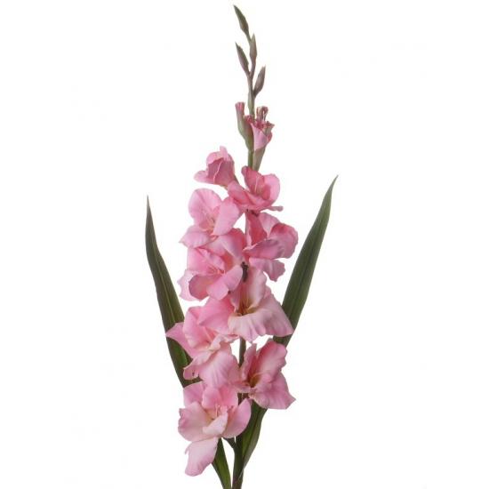 Roze gladiolen 102 cm